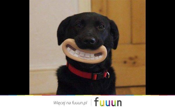 Podaruj uśmiech swojemu psu
