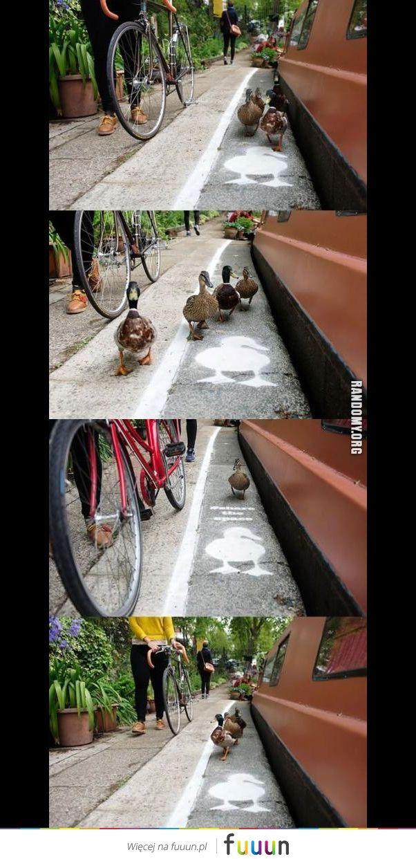 Droga dla kaczuszek